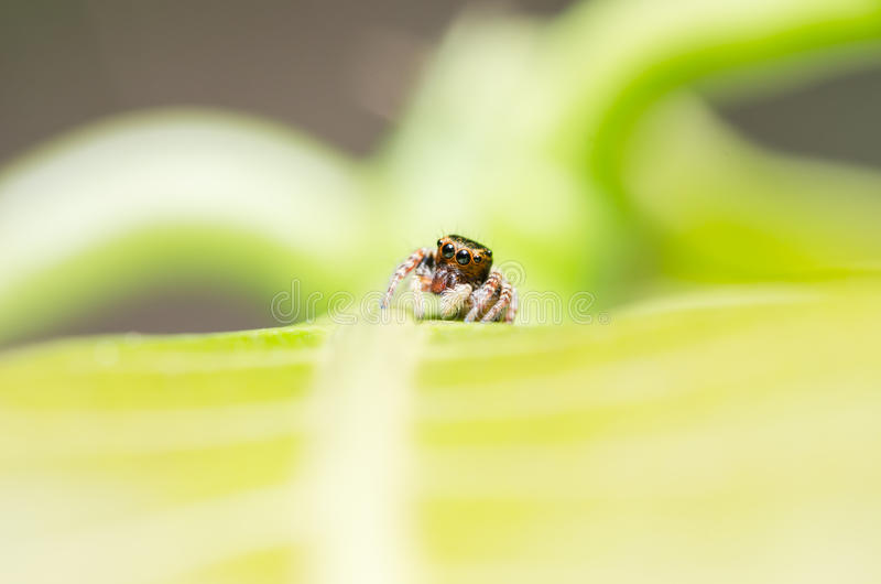 Spider In Green Nature Background Royalty Free Stock Photo