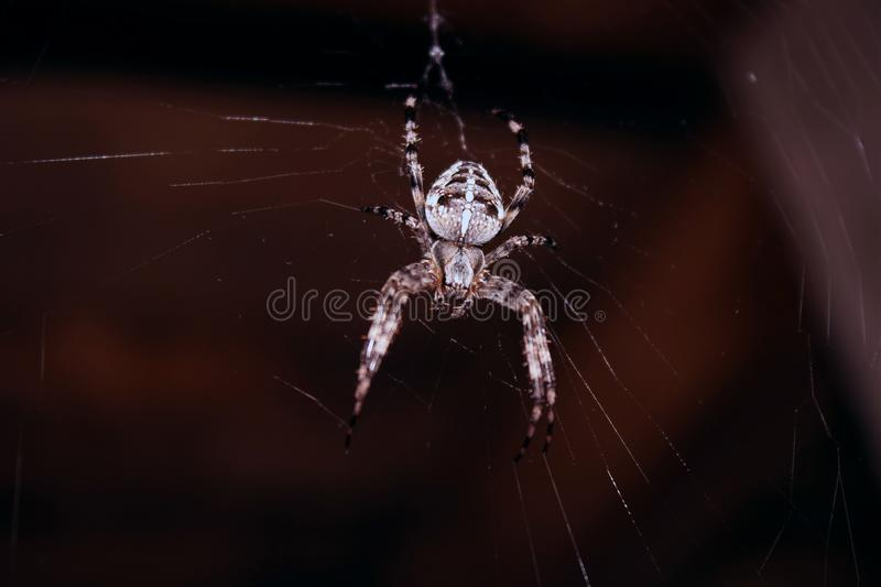 Spider Hanging On Spider Web royalty free stock photography