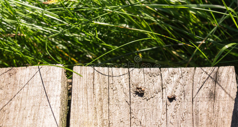 Spider and his prey on wooden plank. animal, background. Little spider and his prey on wooden plank at summer. animal, background stock photos