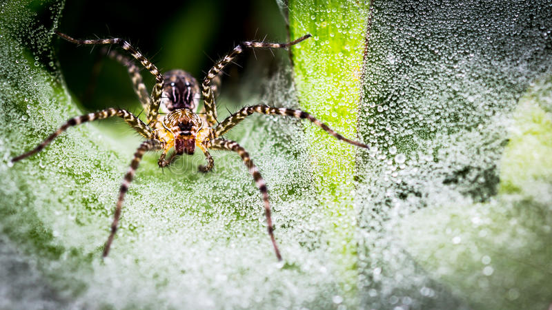 Spider on the hole of it. stock photo