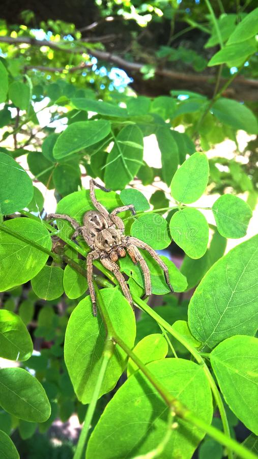 Spider in a hot day royalty free stock image