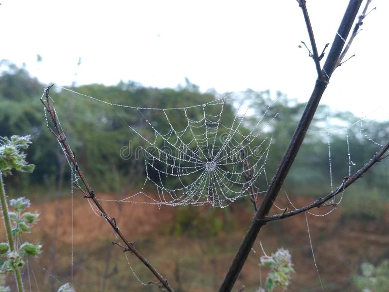 Spider hut stock photo