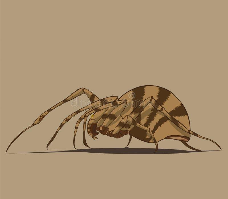 Spider  and illustration
