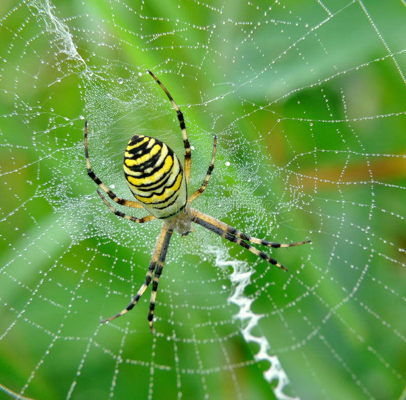 Free Spider In Her Spiderweb Stock Image - 15466981