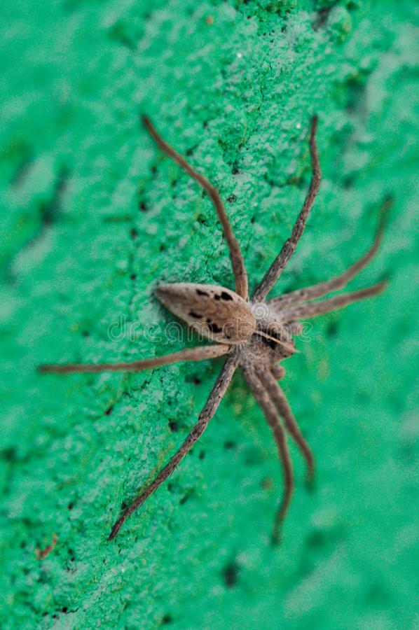 Spider isolated on green texture background. Natural animal detail web white insect wildlife macro nature pattern silk danger trap cobweb net closeup black royalty free stock photo