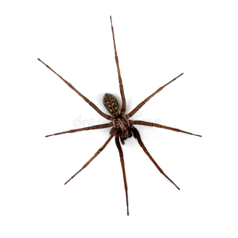 Spider isolated on white, top view. Spider isolated on whitebackground , top view stock photography