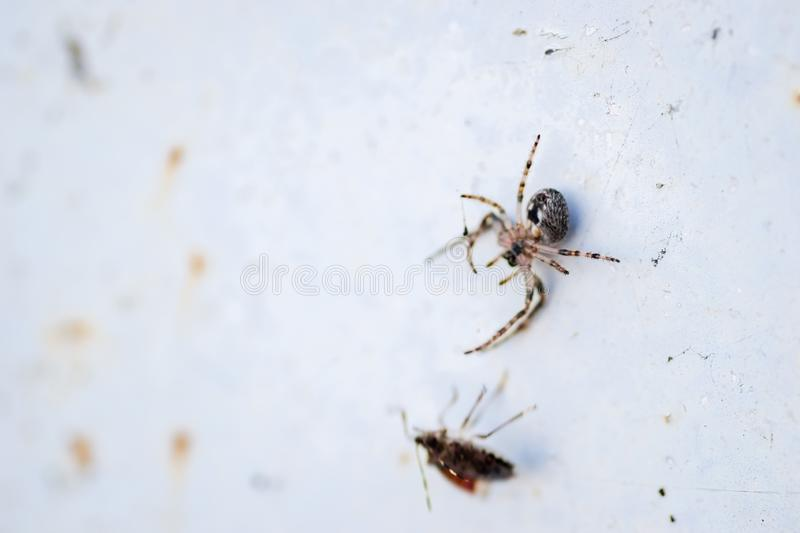 Spider in its natural environment royalty free stock photo