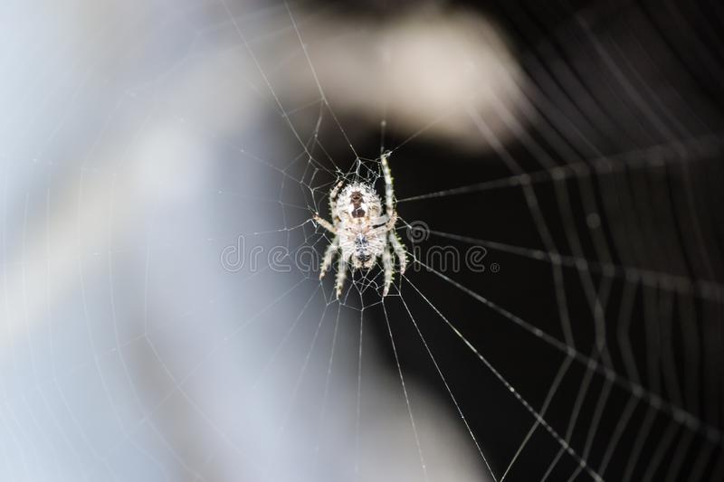 Spider in its natural environment royalty free stock photos
