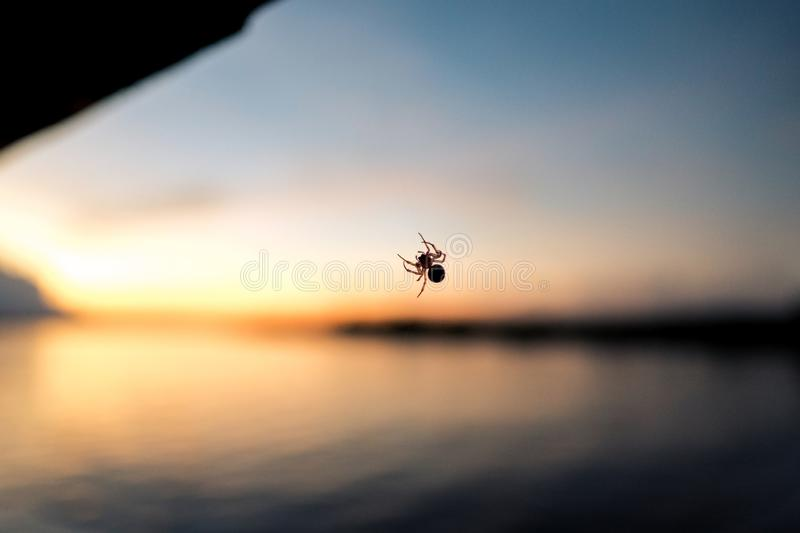 A spider on its net while the sun sets in the back royalty free stock photos