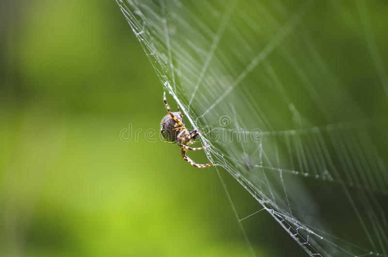 Spider on its prey royalty free stock photography