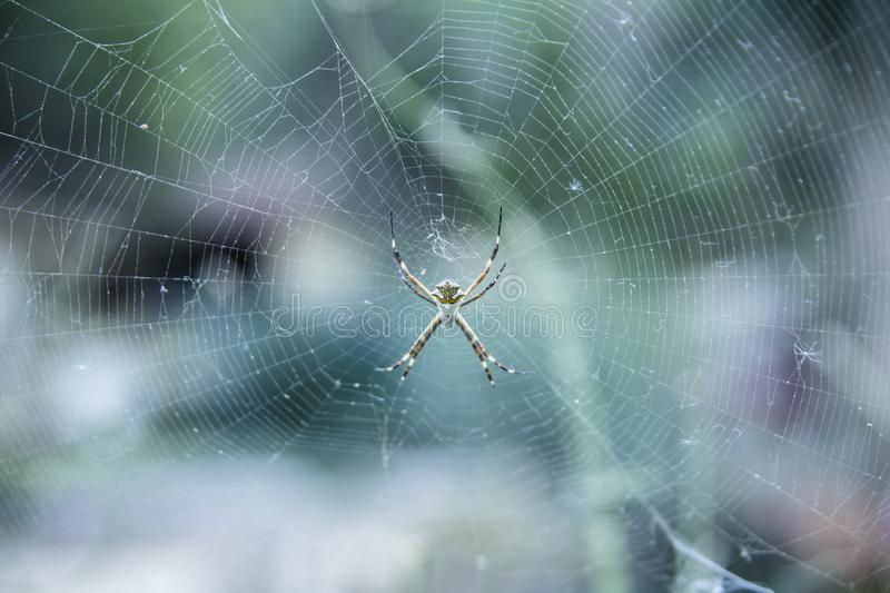 Spider and its spiderweb stock photography