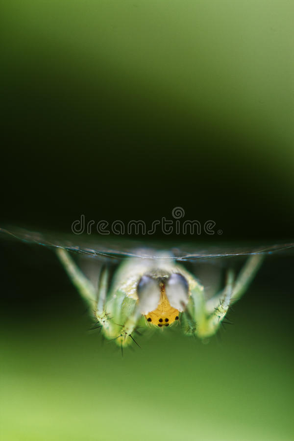 Download Spider in its web stock photo. Image of protection, wait - 19316080