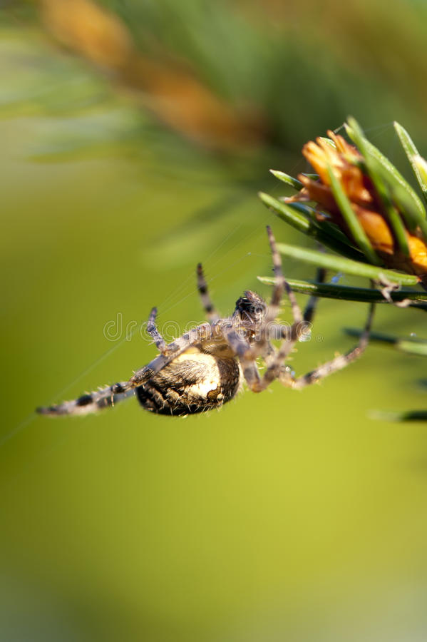 Download Spider on its Web stock photo. Image of up, hunter, spider - 27362456