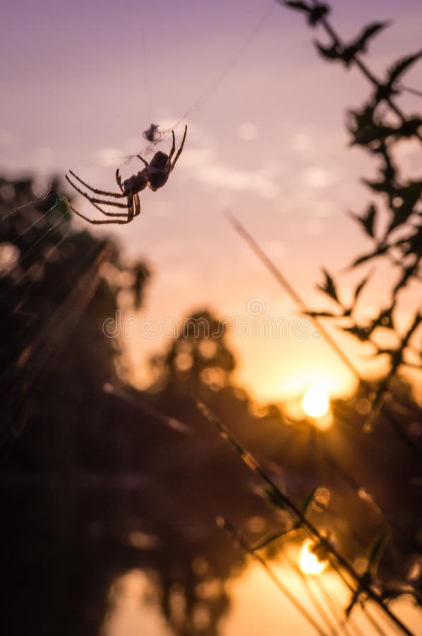 A spider on its web at sunset stock photos