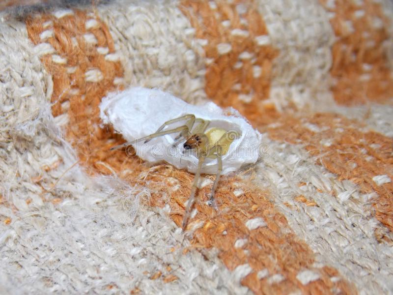 Spider that just hatched stock photos