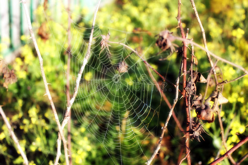 Spider line stock images