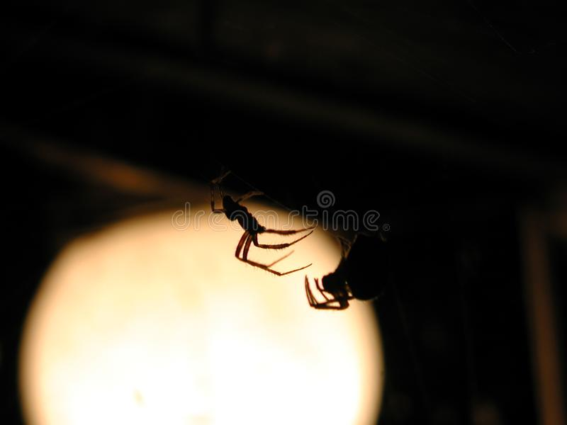Spider Lovers