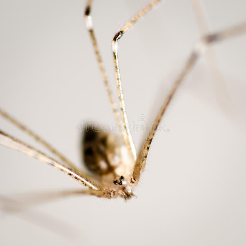 Spider macro royalty free stock photos