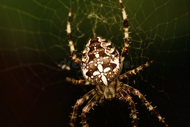 A spider makro royalty free stock image