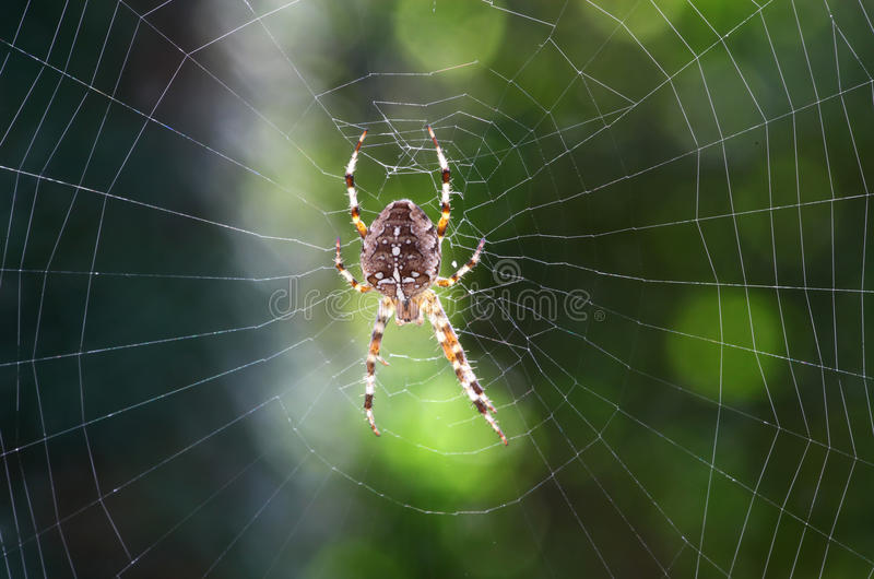 Download Spider N Web Royalty Free Stock Photos - Image: 11495218