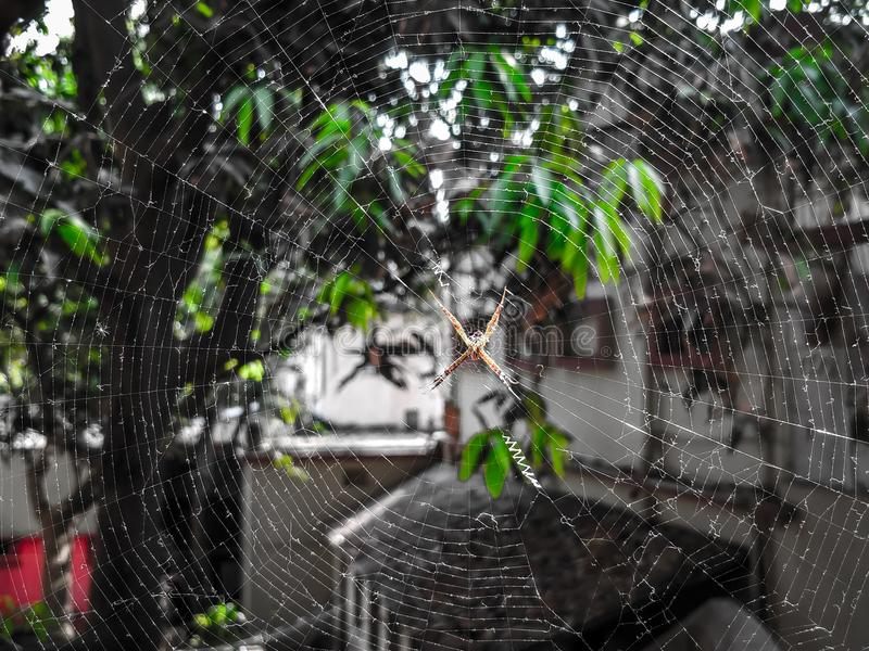 Spider. Nature love click royalty free stock image