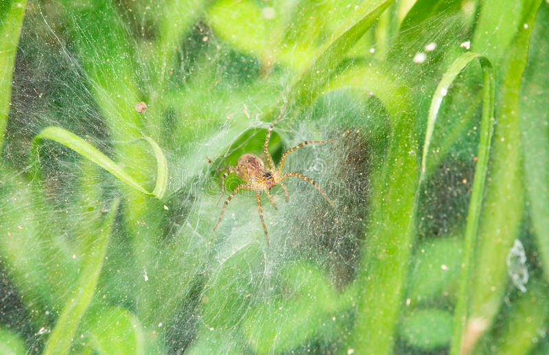 Spider Nest Royalty Free Stock Images
