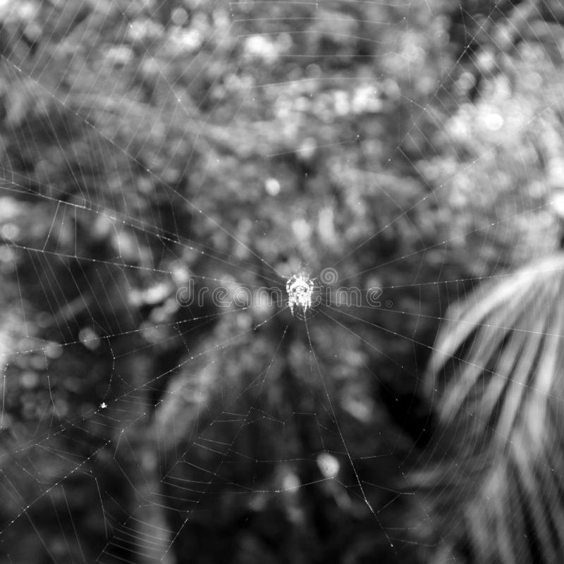 Spider net in black and white mood. stock photography
