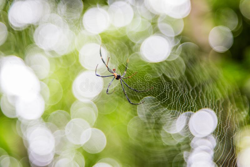 Spider on net with blur green bokeh background stock photos