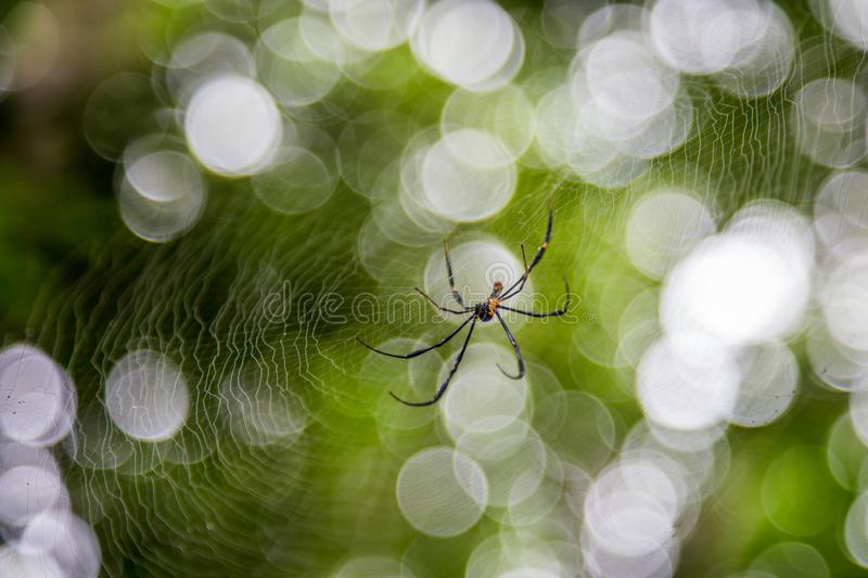 Spider on net with blur green bokeh background stock photography