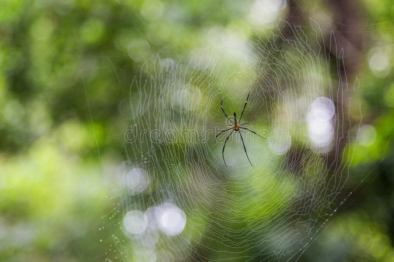 Spider on net with blur green bokeh background stock image