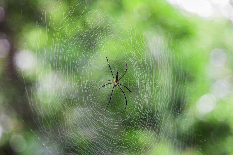 Spider on net with blur green bokeh background stock images