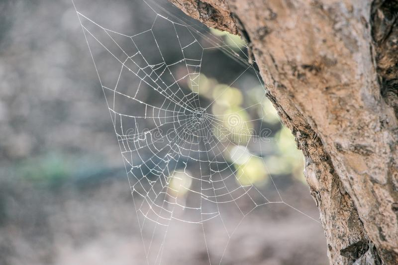 Spider net in nature royalty free stock photo