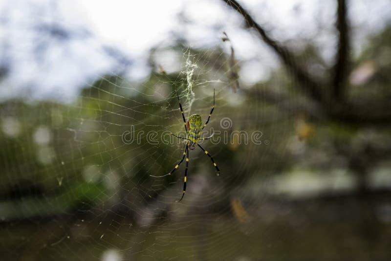 Spider on net in sky in Japan stock photo