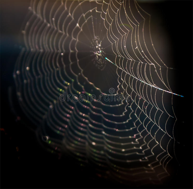 Spider net. In sunshine, dark background royalty free stock image