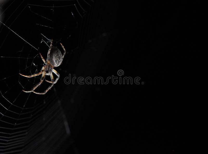 Download Spider in the night stock image. Image of spider, insect - 28088399