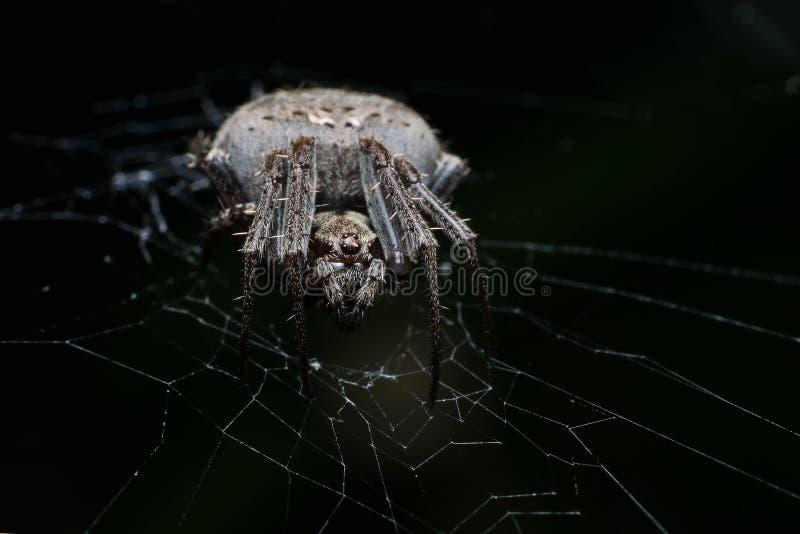 Spider at night stock photo