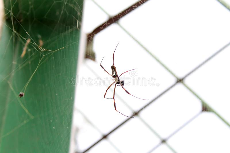Spider. One of the abandoned trains in Los Teques, Venezuela. Towards the station El Encanto stock images