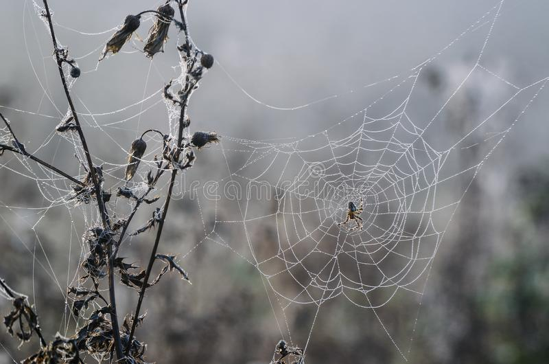 SPIDER ON A PEARLY COBWEB stock images