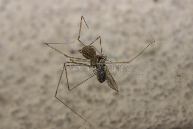 Spider preying an insect stock photos