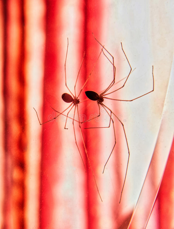 Spider reflection royalty free stock images