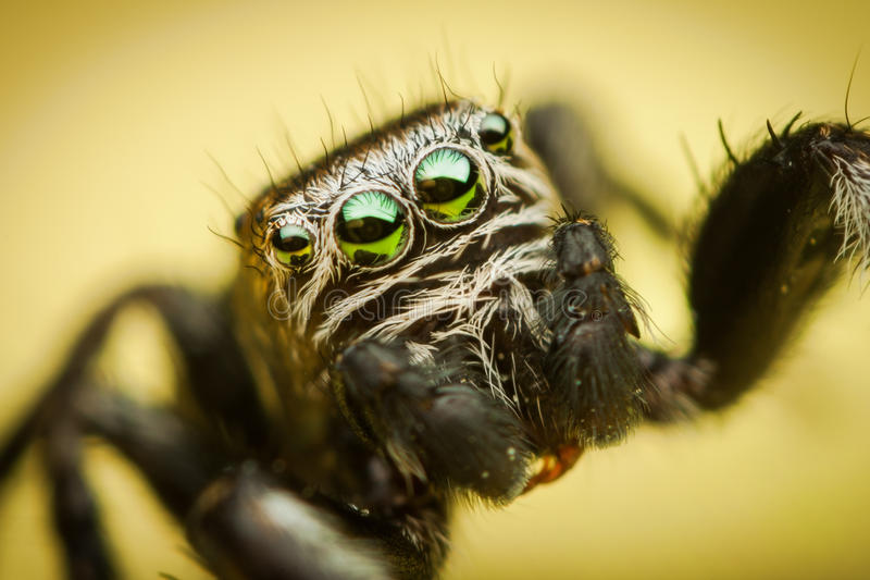 Spiders eye details royalty free stock image