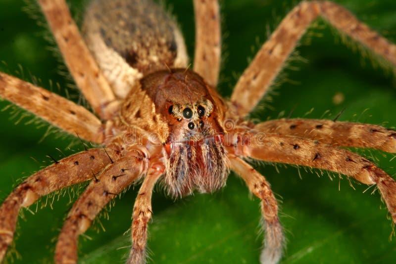 Spider's eyes royalty free stock photos