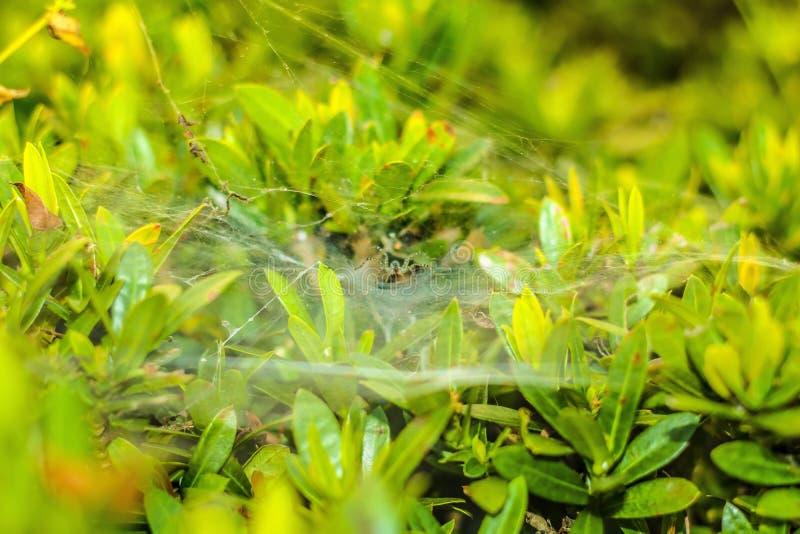 Spider& x27; s gniazdeczko zdjęcia stock