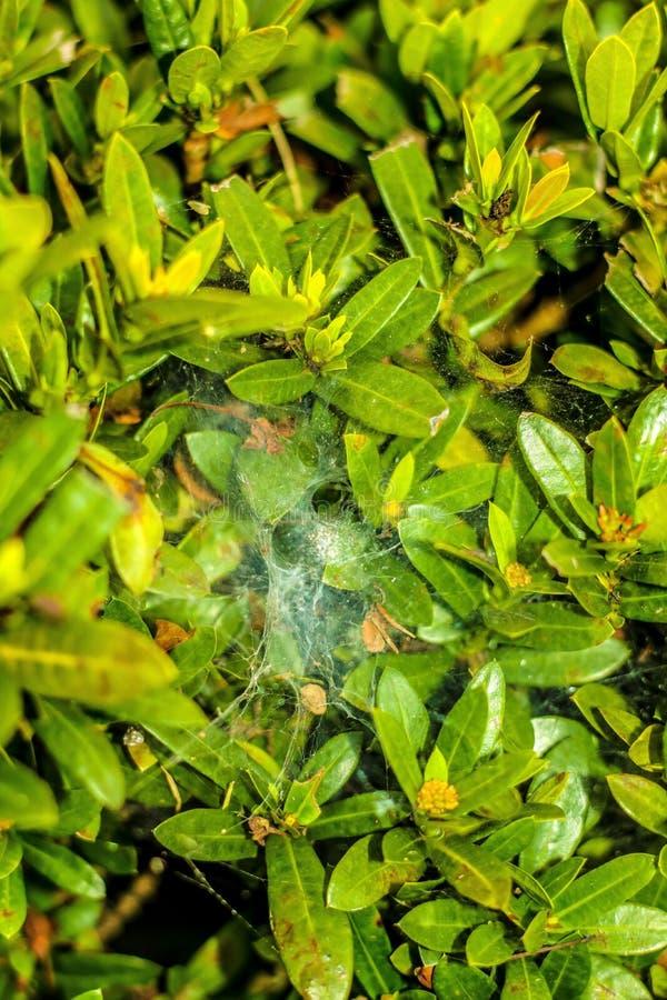 Spider& x27; s gniazdeczko zdjęcia royalty free