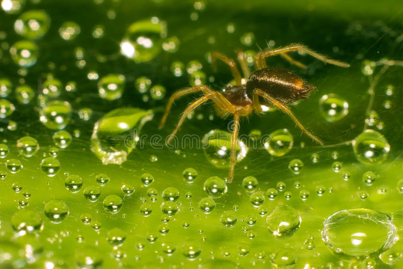 Spiders jewels stock photography
