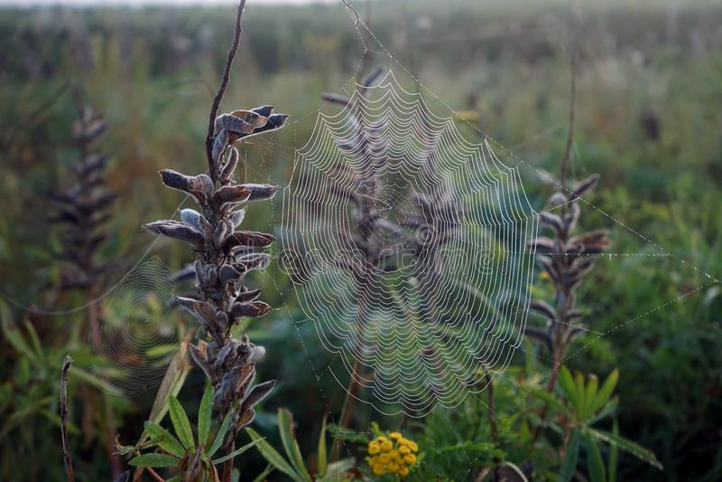 Spider's net royalty-vrije stock foto