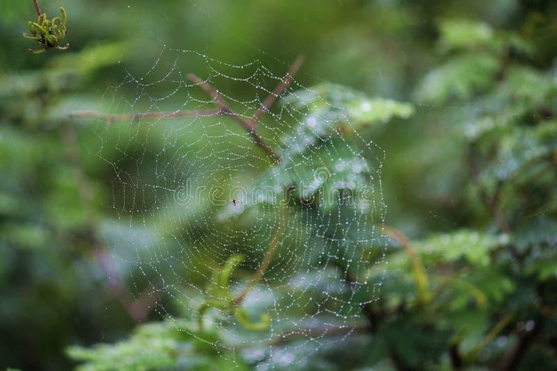 Spider& x27; s-Netz lizenzfreies stockbild