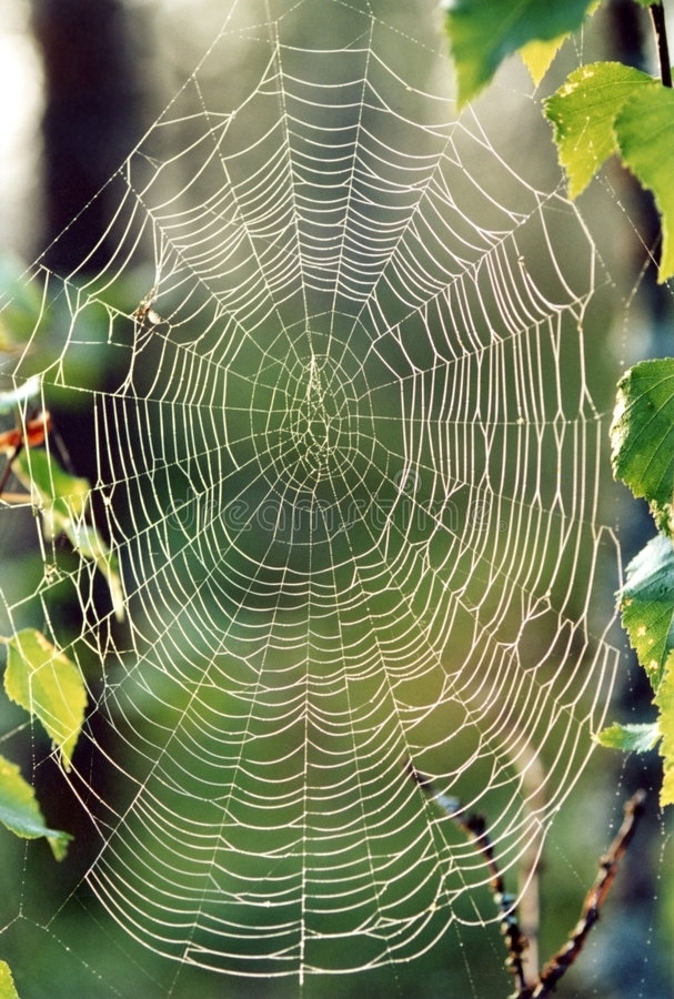 Free Spider S Web Royalty Free Stock Image - 591576