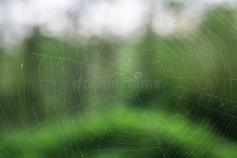 Spider`s web in jungle. With blur background stock images