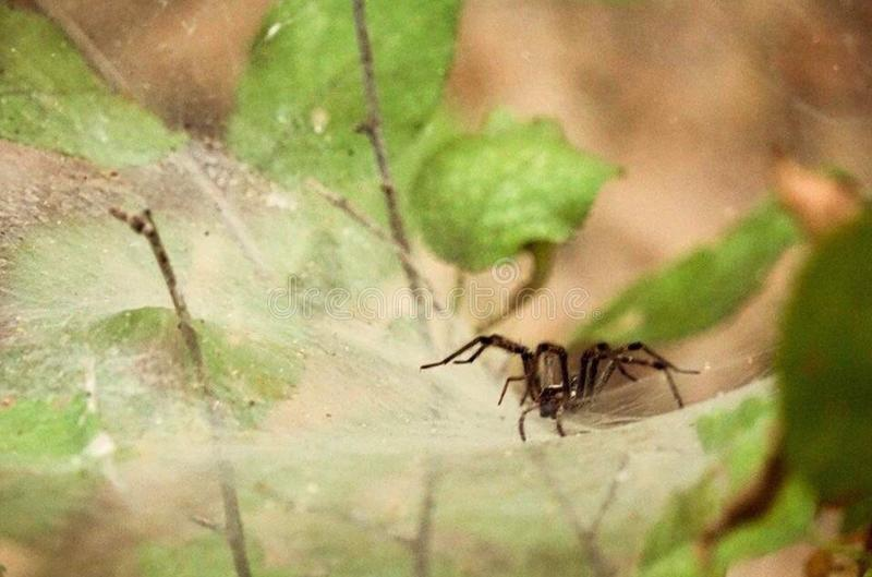 Spider& x27;s Web royalty free stock image